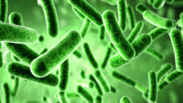 Potęga bakterii